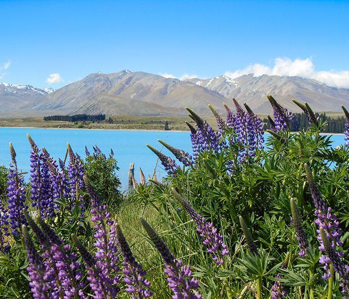 Entdecke Neuseeland, Stop 4: Lake Tekapo
